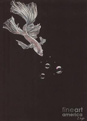 White Betta Art Print by Caroline Kyle