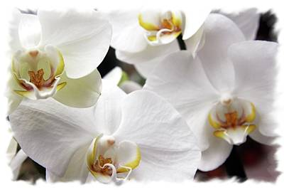 Photograph - White Big Orchids  by Lali Kacharava