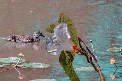 Photograph - White Bindweed And Mandarin Duck Mix #g5 by Leif Sohlman
