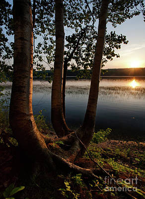 Photograph - White Birch And Kennebec River At Sunset, So.gardiner Me #8360-63 by John Bald