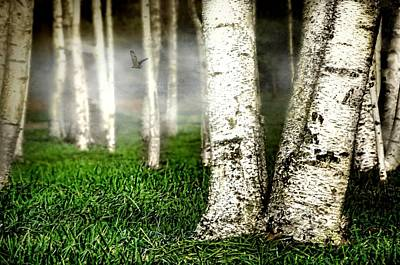 Photograph - White Birch Forest by Diana Angstadt