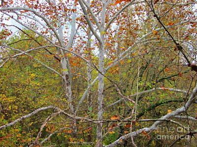 Photograph - White Birch by Kathie Chicoine