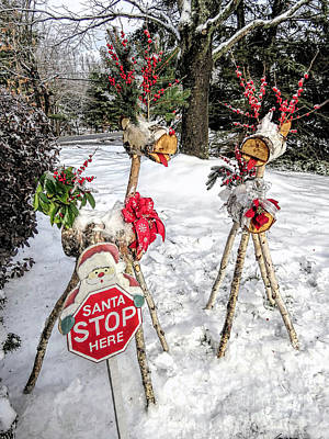 Photograph - White Birch Reindeer by Janice Drew