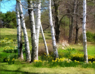 Photograph - White Birch Trees And Jonquils by Betty Denise