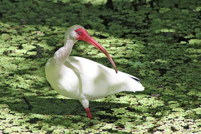 Photograph - White Bird by Linda Sannuti