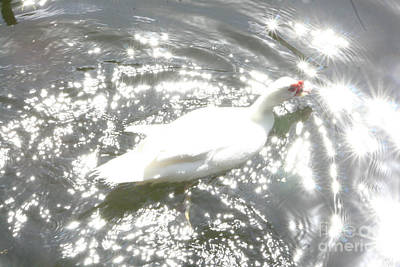 Photograph - White Bird On Sparkly Water by Mary Mikawoz