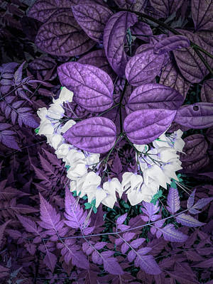 Photograph - White Bleeding Hearts Vertical Purple by Aimee L Maher ALM GALLERY