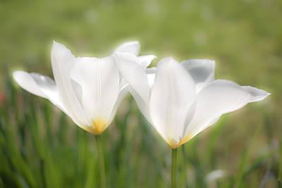 Photograph - White Blooms by Nila Newsom
