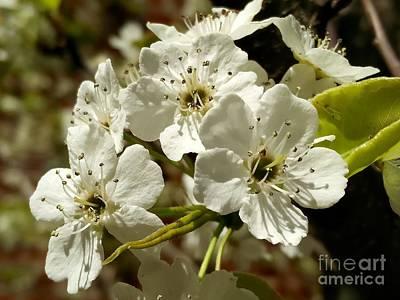 World War 2 Action Photography - White Blossom  by Mioara Andritoiu