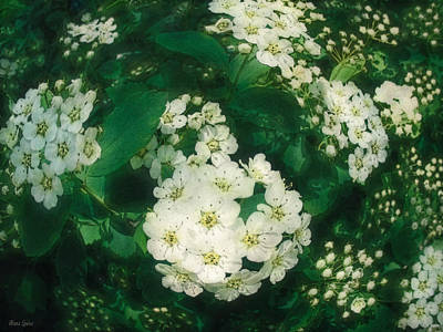 Photograph - White Blossoms Around Abstract by Anna Louise