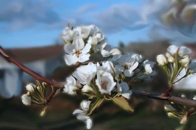 White Blossoms Art Print by Robert Bewick