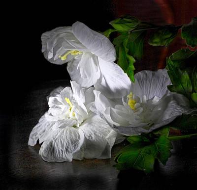 White Blossoms Art Print by Robert Och
