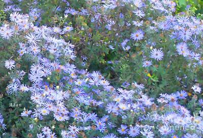 Wild Flowers Of Texas Photograph - White Blue Cluster by Felipe Adan Lerma