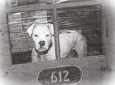 Boxer Dog Digital Art - White Boxer Dog Behind Door, Black And White by Trish E Harmon