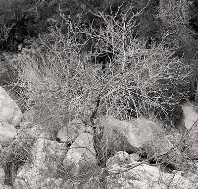 Royalty-Free and Rights-Managed Images - White Branches by Laurel Powell