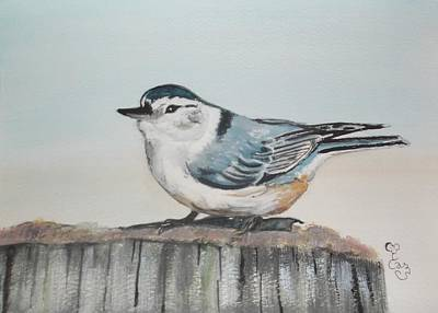 Painting - White Breasted Nuthatch by Carole Robins