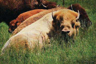 Bison Digital Art - White Buffalo by Bill Jonas