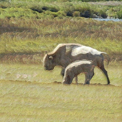 Photograph - White Buffalo by Ernie Echols