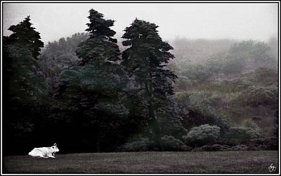 Photograph - White Bull Against A Painted Forest by Wayne King