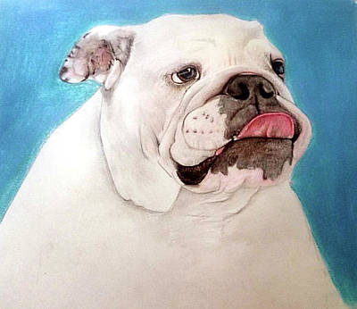 White Bulldog Art Print by Maria Boklach
