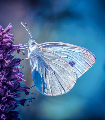 Photograph - White Butterfly by Lilia D