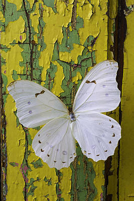 Chip Photograph - White Butterfly On Old Wall by Garry Gay