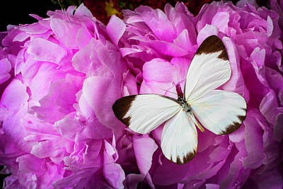 Butterfly Photograph - White Butterfly On Pink Peony by Garry Gay