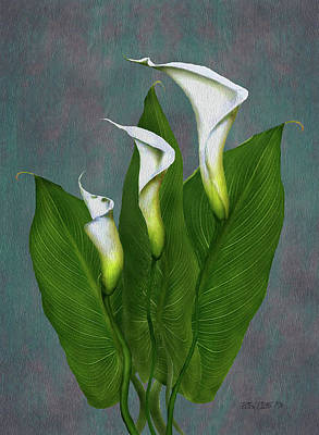 Painting - White Calla Lilies by Peter Piatt