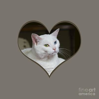 Photograph - White Cat On A Transparent Heart by Terri Waters