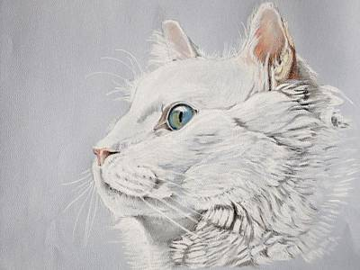 Pastel - White Cat by Teresa Smith