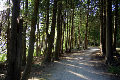 Photograph - White Cedar Trail H by Dylan Punke