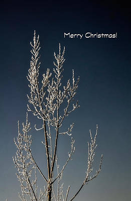 Photograph - White Christmas Frost Card by Jerry Sodorff
