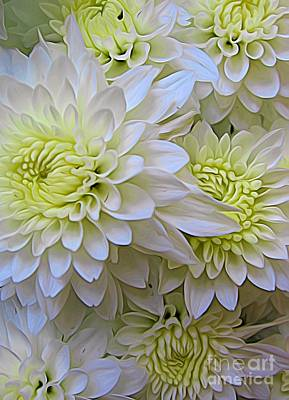 Photograph - White Chrysanthemum Flowers Expressionistic Effect by Rose Santuci-Sofranko