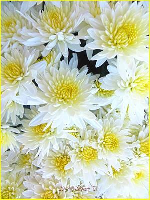 Photograph - White Chrysanths by Sonali Gangane