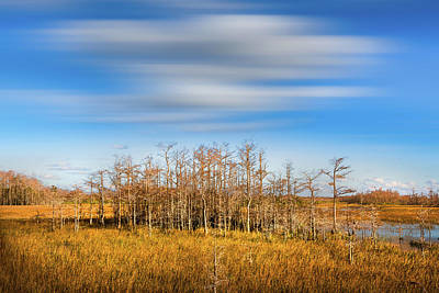 Photograph - White Clouds Over The Cypress Grove Dreamscape by Debra and Dave Vanderlaan