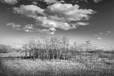 Photograph - White Clouds Over The Cypress Grove In Black And White by Debra and Dave Vanderlaan