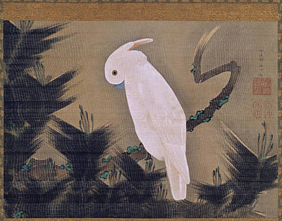 Cockatoo Drawing - White Cockatoo On A Pine Branch by Ito Jakuchu