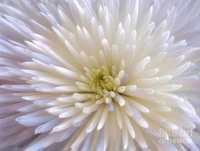 Photograph - White Colour Burst  by Joan-Violet Stretch