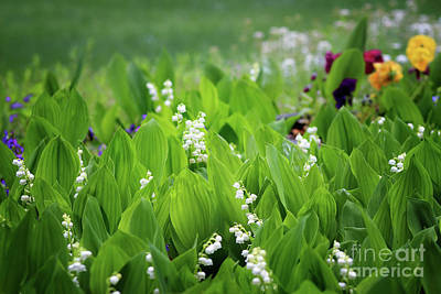 Photograph - White Coral Bells by Karen Adams