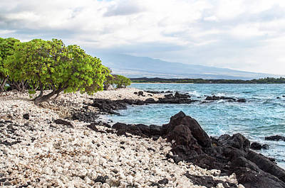Photograph - White Coral Coast by Denise Bird