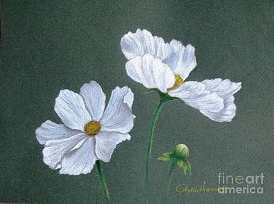 Drawing - White Cosmos by Phyllis Howard