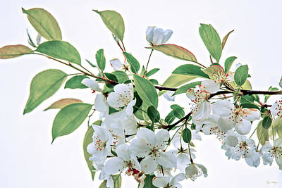 Photograph - White Crabapple Blossoms by Skip Tribby