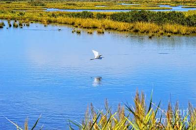 Photograph - White Crane Flyby by Sharon Woerner