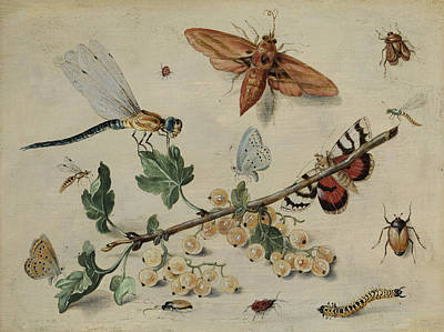 Grasshopper Painting - White Currants And Insects by Jan van Kessel