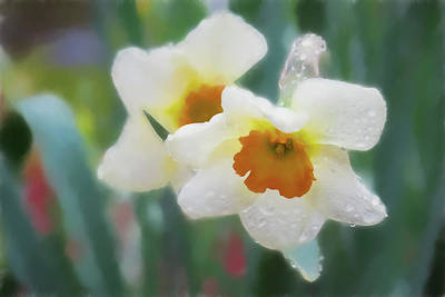 Digital Art - White Daffodils In The Rain by Rusty R Smith