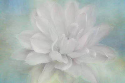 Photograph - White Dahlia Softness by Kim Hojnacki