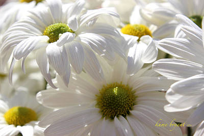 Photograph - White Daisies by Kume Bryant