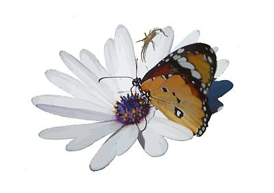 Photograph - White Daisy And Butterfly Vector Background Removed by Tracey Harrington-Simpson