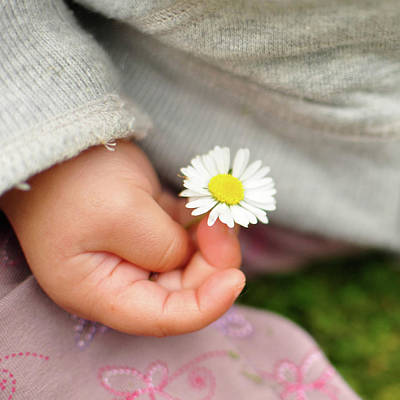 Single Flower Photograph - White Daisy In Baby Hand by © Mameko