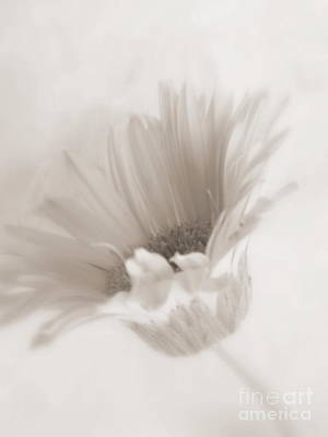 Photograph - White Daisy - Purity by Ella Kaye Dickey